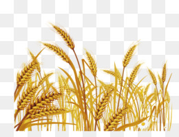 Elymus Repens Png And Elymus Repens Transparent Clipart Free