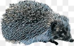 Domesticated Hedgehog Hedgehog