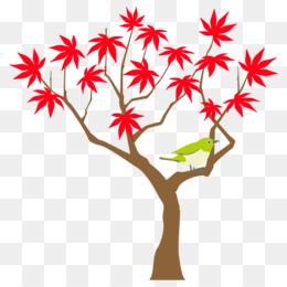 autumn maple tree maple tree autumn tree