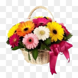flower gerbera bouquet cut flowers barberton daisy