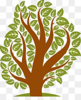 green leaf tree plant woody plant