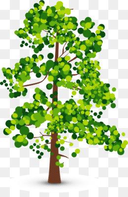 plant tree green flower leaf