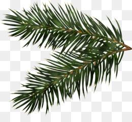 Christmas pine branch