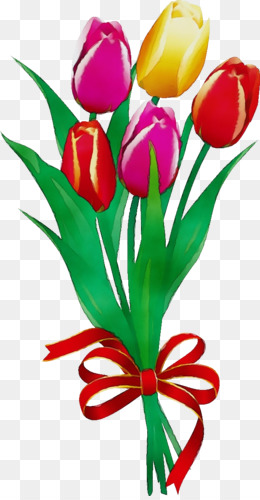 cut flowers tulip flower petal plant