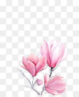 spring flower spring floral flowers