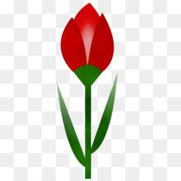 tulip flower leaf plant grass