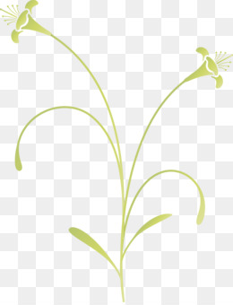 flower lily of the valley plant leaf pedicel