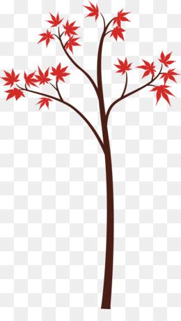 plant flower tree leaf maple