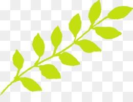 leaf green plant flower branch