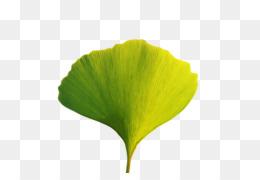 leaf plant stem yellow m-tree tree