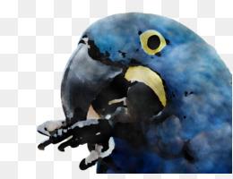 macaw parakeet beak